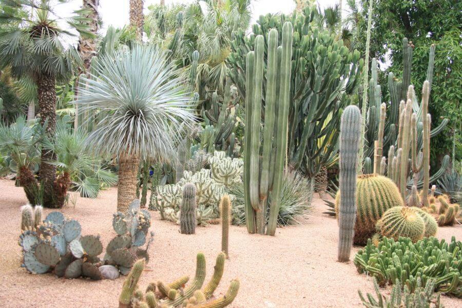 Dise o de jardines con cactus for Jardines con cactus