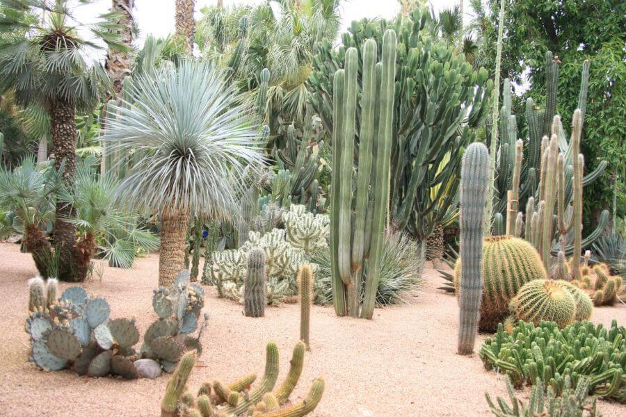 dise o de jardines con cactus. Black Bedroom Furniture Sets. Home Design Ideas