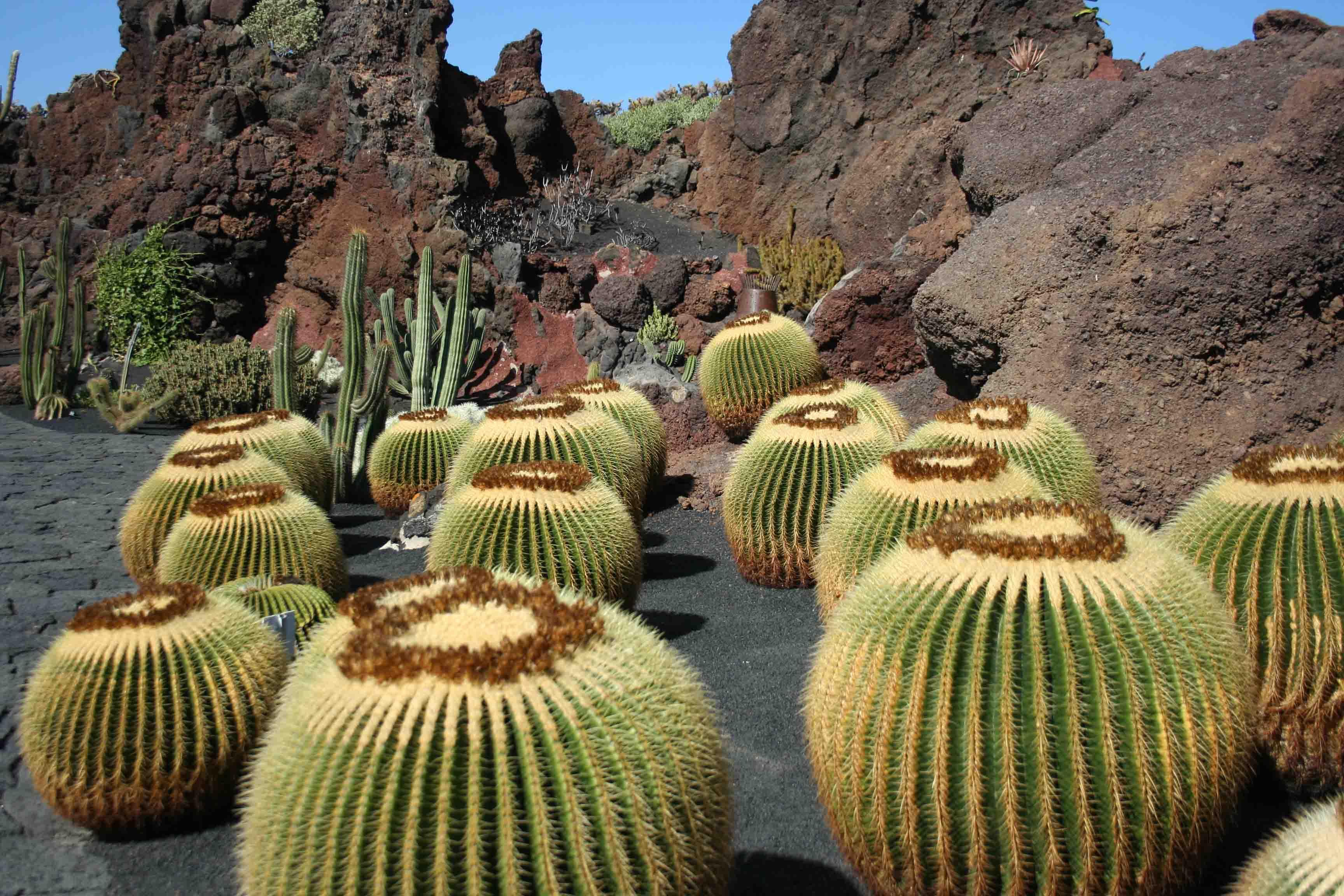 Dise o de jardines con cactus - Jardines con cactus y piedras ...