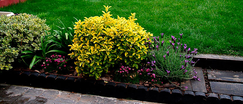 jardineria_almeria