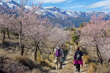 almendros-abla-almeria-Sierra-Nevada