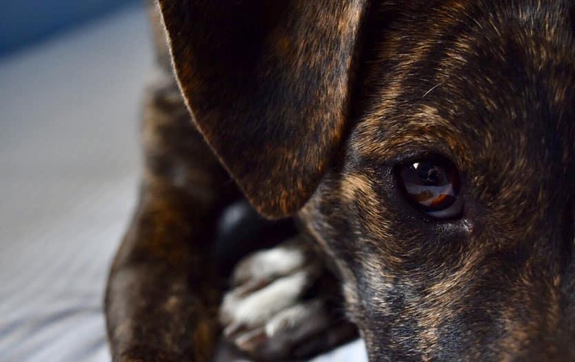 fotos solidarias mascotas