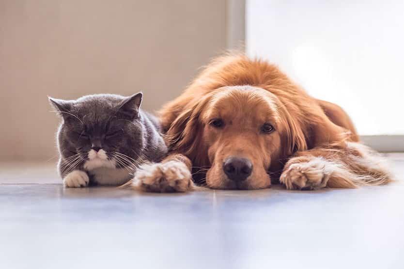 perros-gatos-almeria