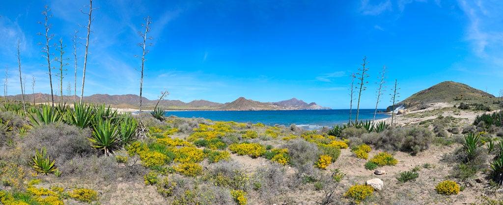 Pitas Almería Playa