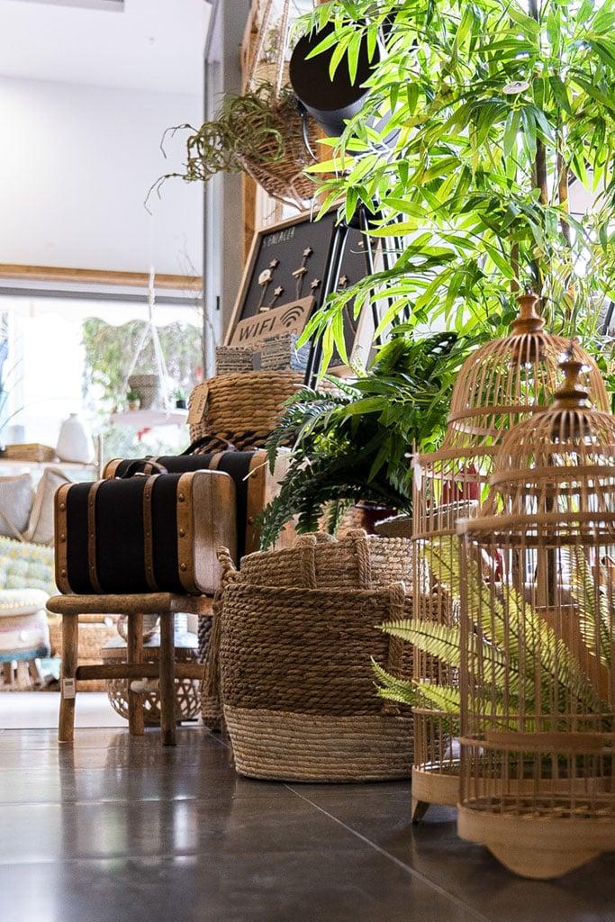 8-plantas-decorativas-almeria-avdecoandhome