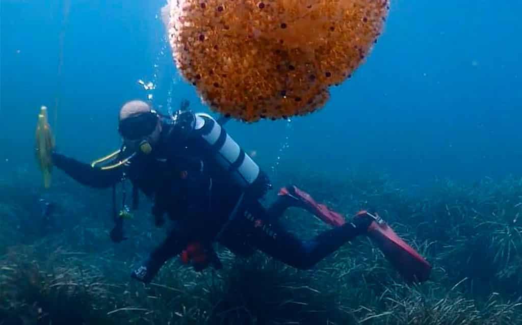 Diver & Siren