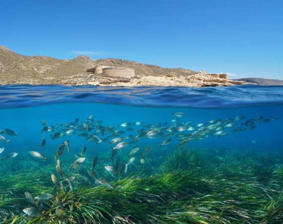 Fondos Submarinos Almería