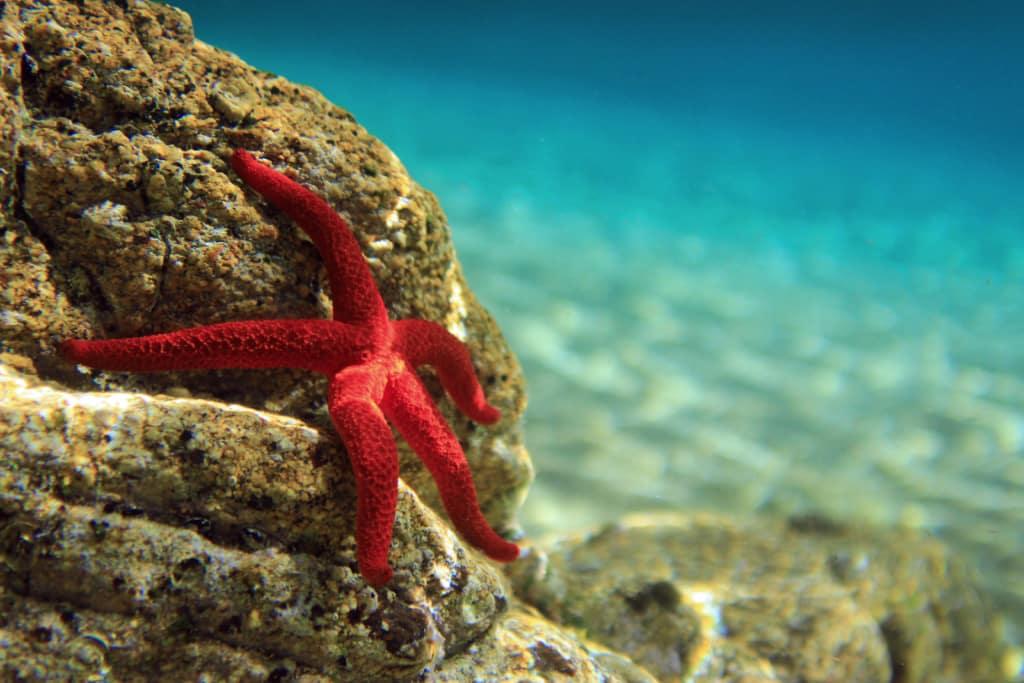 estrella de mar en una roca debajo del agua