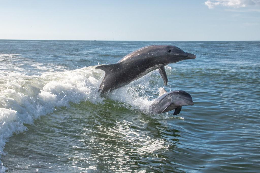 delfines saltando en una pequeña ola