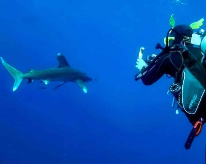 Chanquete junto a un tiburón